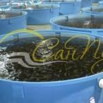 емкости для разведения рыбы купить