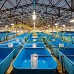 емкости для рыбы от производителя